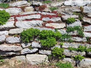 plants_in_a_stone_wall_195194