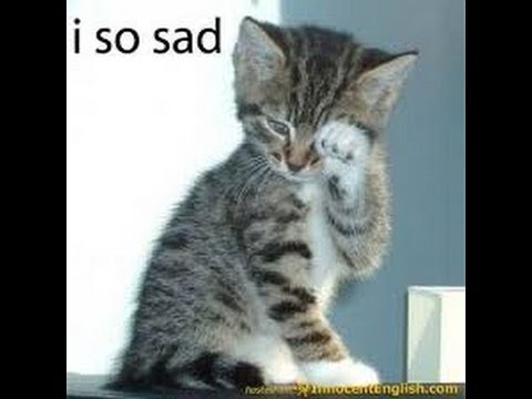 cat crying